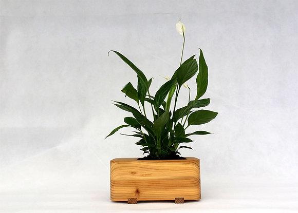 English Cedar Planter