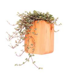 small wall mounted planter