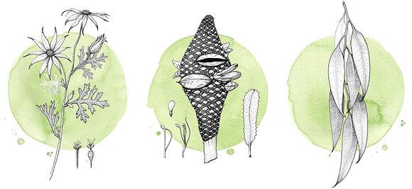 NATIVES ON GREEN | 3x Art Print