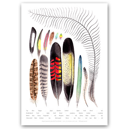 WH FEATHERS ON WHITE | Art Print