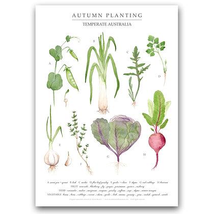 AUTUMN PLANTING | A3 Art Print