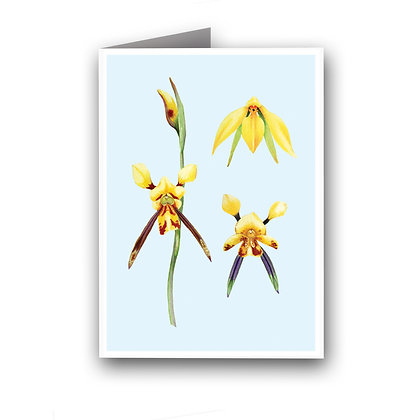 WH GREETING CARD | Donkey Orchid