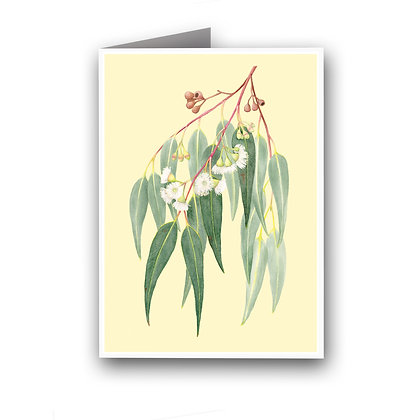 WH GREETING CARD | Eucalypt