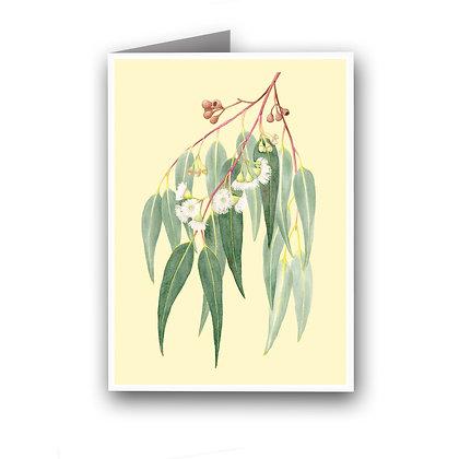 GREETING CARD | Eucalypt