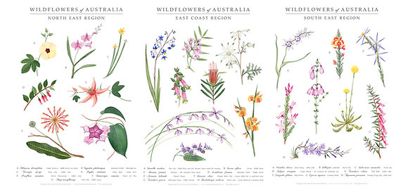 WILDFLOWERS | 3x A3 Art Print