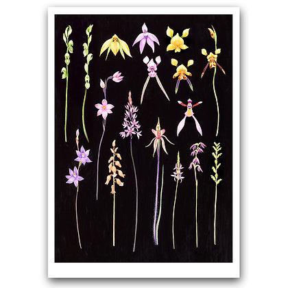 GRASSLAND ORCHIDS | Art Print