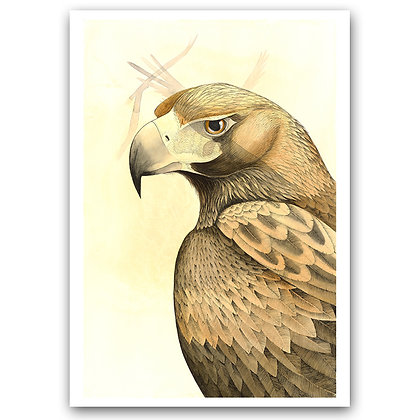 WEDGE-TAILED EAGLE | Art Print
