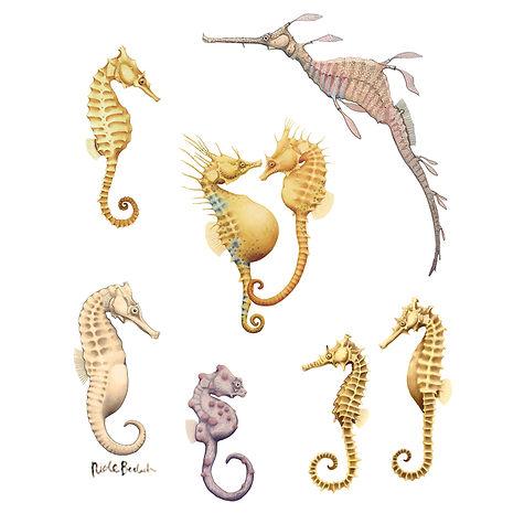 Seahorse, seadragon Australia, Watercolour painting, Nicole Berlach