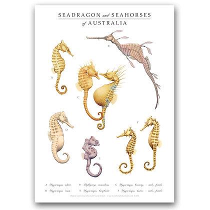WH SEAHORSES | A3 Art Print