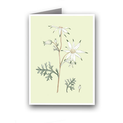 GREETING CARD | Flannel Flower