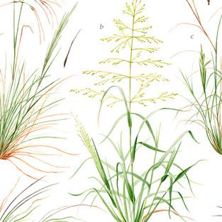 Nicole Berlach GRASSES