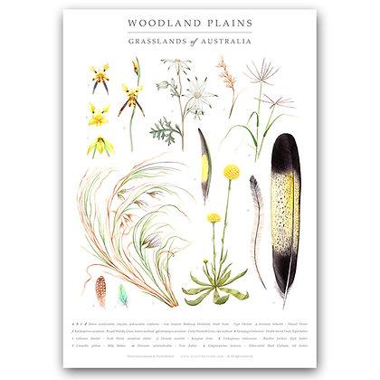 WOODLAND PLAINS | Art Print
