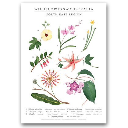 WH NORTH EAST WILDFLOWERS | Art Print