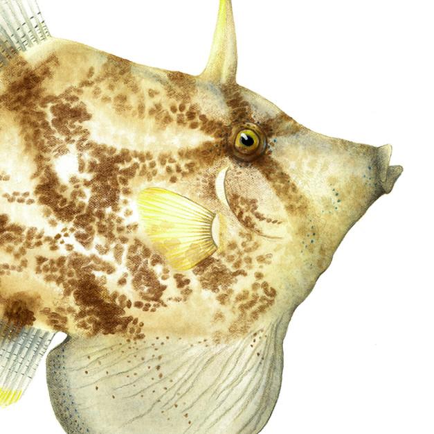 Nicole Berlach FISH