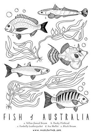 COLOUR IN | FISH