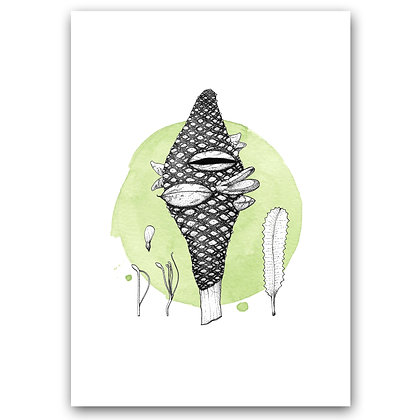 BANKSIA ON GREEN | Art Print