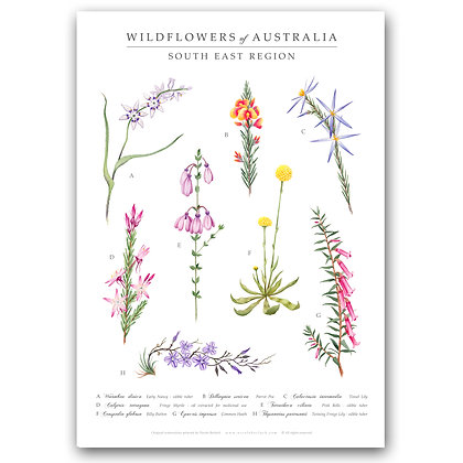 SOUTH EAST WILDFLOWERS | Art Print