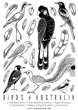 COLOUR IN | BIRDS #2