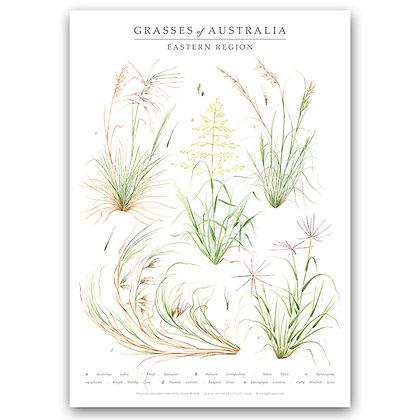 GRASSES OF AUS | Art Print