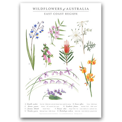 WH EAST COAST WILDFLOWERS | Art Print