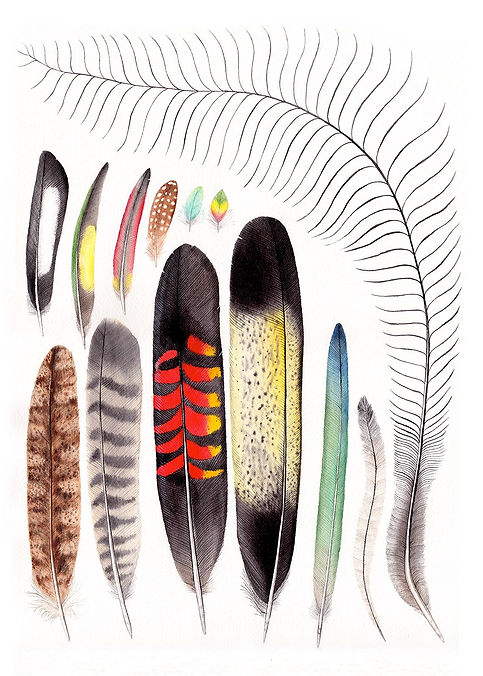 Australian Bird Feathers On white, watercolor paintng, Nicole Berlach