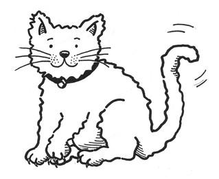 Cat pic B&W
