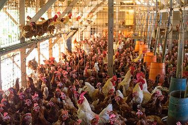 みやぎ農園の鶏舎