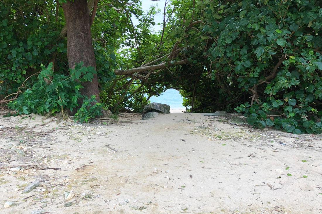 木のアーチをくぐり抜けて海へ
