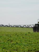Massiver Pestizideinsatz beim Gensoja