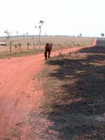 8 Verbrannte Erde. Auf dem Weg in die Re