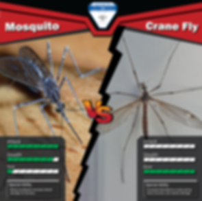 Mosquito vs Crane Fly-01.png