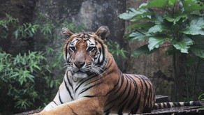 Indonesian Muslims achieve global acclaim for fatwa on wildlife trade