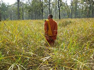 Cambodia tree defender 4998521808_08ffa2
