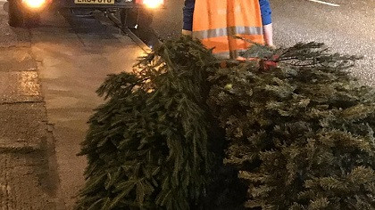 Manorlands Christmas tree collection service