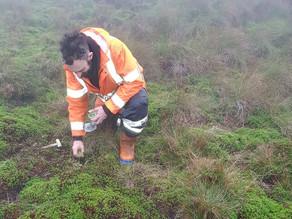 Critical bog building moss planting on Ilkley Moor
