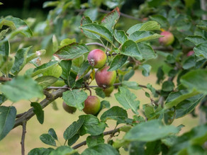 Help needed to plant Community Orchards