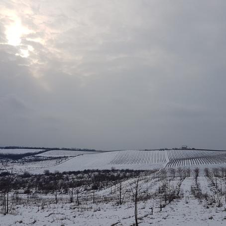 Iarna pe Dealu Mare
