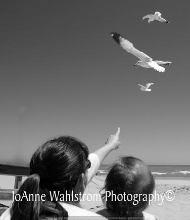 Birds Black and White