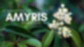 11 Benefits of Amyris Essential Oil - Th