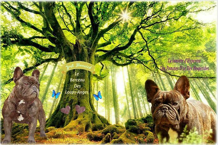 536911_ponthus_beech_brocliande_forest_b
