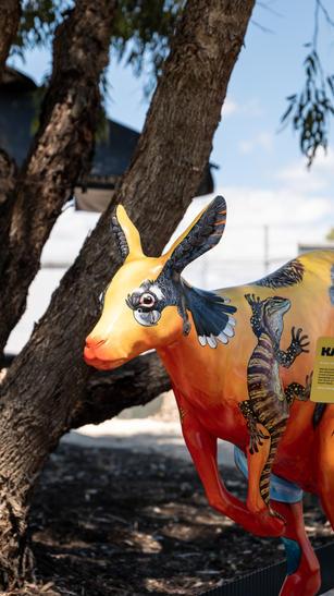 Myalup - Kangaroos-36.jpg