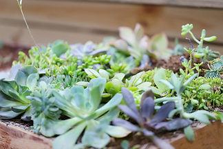 Growing Plants