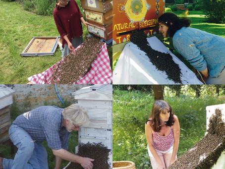 Hardening of the Heart - the task of the modern beekeeper