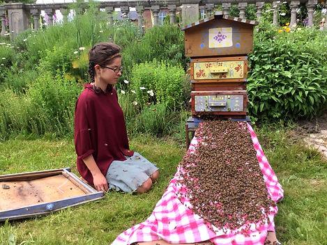 a honeybee swarm