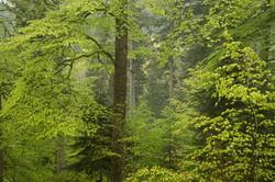 Musique Randonnée Vosges Gérardmer