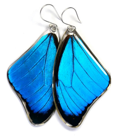 Blue Morpho Menelaus Butterfly, top wings