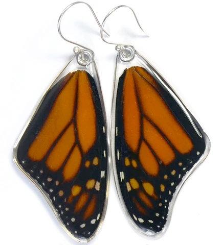 Monarch, top wings