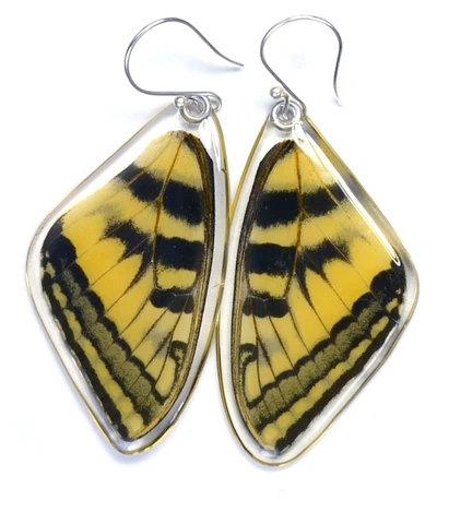 Eastern Tiger Swallowtail Butterfly, top wings