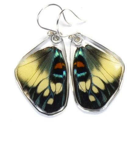 Day Flying Moth, Bottom Wing