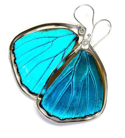 Blue Morpho Menelaus Butterfly, bottom wings